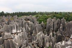 Forêt en pierre Photos libres de droits