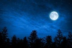 Forêt en silhouette avec le ciel étoilé, éléments de cette image AR Photographie stock libre de droits