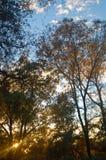 Forêt en soirée Photographie stock libre de droits
