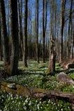 Forêt en Suède Photos stock