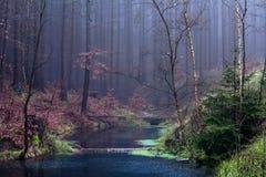 Forêt en Tchèque Rebublic, Image stock