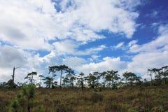 Forêt en Thaïlande Photographie stock