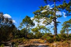 Forêt en Thaïlande Images libres de droits