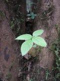 Forêt en Thaïlande pour le déplacement image stock