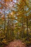 Forêt en Valia Calda image libre de droits