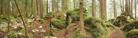 Forêt enchantée image libre de droits
