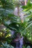 Forêt enchantée Photos libres de droits