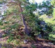 Forêt enchantée Photo stock