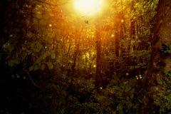 Forêt enchantée avec des papillons et des étincelles de lumière illustration libre de droits