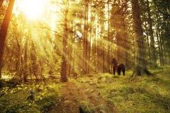 Forêt enchantée avec un cheval et des oiseaux Photographie stock libre de droits
