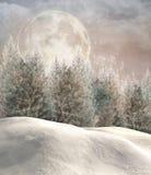 Forêt enchantée d'hiver Images libres de droits