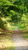 Forêt enchantée de Thuringe photographie stock