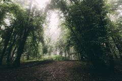For?t enchant?e de Transylvanian avec le brouillard photo stock