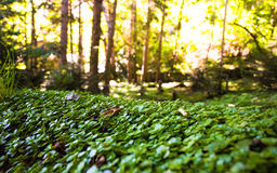 Forêt enchantée mystique images stock
