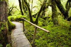 Forêt enchantée - parc national de Queulat - le Chili photos libres de droits