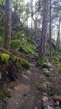Forêt enchantée sur l'île de Pender Photographie stock