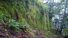 Forêt enchantée sur l'île de Pender Images stock
