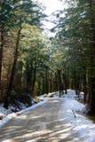 Forêt ensoleillée Photographie stock libre de droits