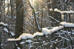 Forêt ensoleillée de l'hiver Photographie stock libre de droits