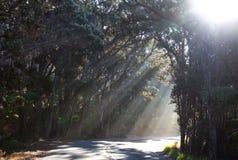 Forêt ensoleillée en Hawaï Image stock