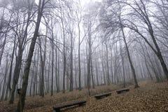 Forêt enveloppée en brouillard Photos libres de droits