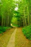Forêt et allée en bambou Images libres de droits