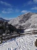Forêt et arêtes couvertes de neige photos stock