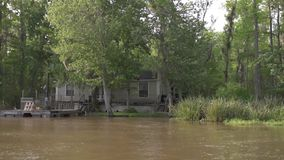 Forêt et arbre de jungle de Honey Island Swamp Tour With à la Nouvelle-Orléans, Louisiane clips vidéos
