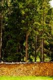 Forêt et bois Photos stock