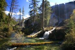 Forêt et cascades à écriture ligne par ligne Photo libre de droits