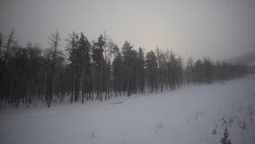 Forêt et champ d'hiver banque de vidéos
