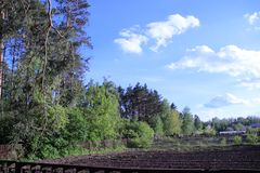 Forêt et ciel Photo stock