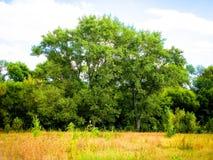 Forêt et clairière de septembre images stock