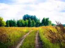Forêt et clairière de septembre photos stock