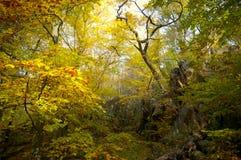 Forêt et couleurs Photo stock