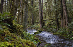 Forêt et courant Photo libre de droits