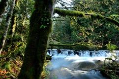 Forêt et eau moussues image libre de droits