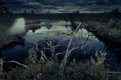 Forêt et fantôme mystérieux de nuit Photographie stock