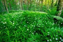 Forêt et fleurs Image libre de droits