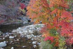 Forêt et fleuve d'automne photo libre de droits