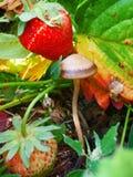 Forêt et fraise Photos libres de droits