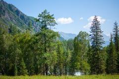 Forêt, et la rivière derrière lui Image libre de droits