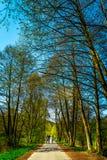 Forêt et la route dans Sunny Day intelligent Image stock