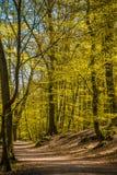 Forêt et la route dans Sunny Day intelligent Image libre de droits