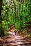 Forêt et la route dans Sunny Day intelligent Images libres de droits