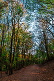 Forêt et la route dans Sunny Day intelligent Photo libre de droits