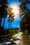 Forêt et la route dans Sunny Day intelligent Photos stock