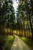 Forêt et la route dans Sunny Day intelligent Photos libres de droits