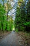 Forêt et la route dans Sunny Day intelligent Photographie stock libre de droits