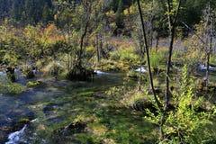 Forêt et lac Image libre de droits